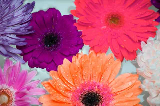 assorted color daisy flowers in bloom
