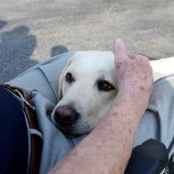 George-HW-Bush-Service-Dog-Sully-Lying-Under-His-Casket